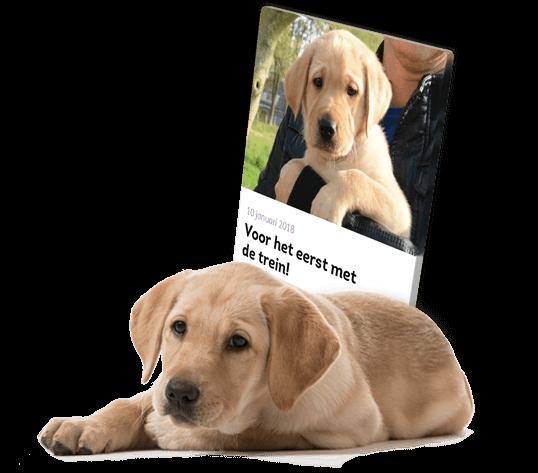 Liggende blonde pup voor een voorbeeld dagboekbericht